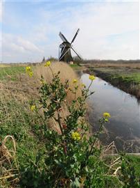 Noordermolen. Foto Koos Dijksterhuis