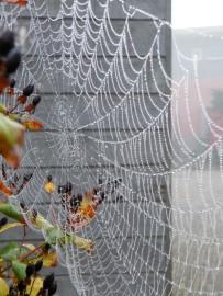 Spinneweb. Foto Koos Dijksterhuis