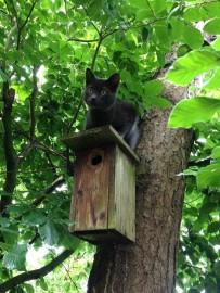 Kat op de kast Foto Stijn Aern