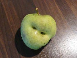 Appel knurft. Foto Koos Dijksterhuis